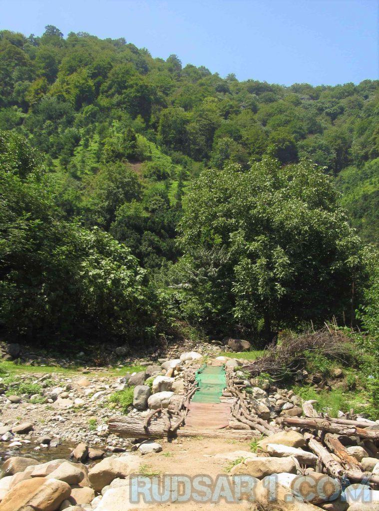 جنگل سموش