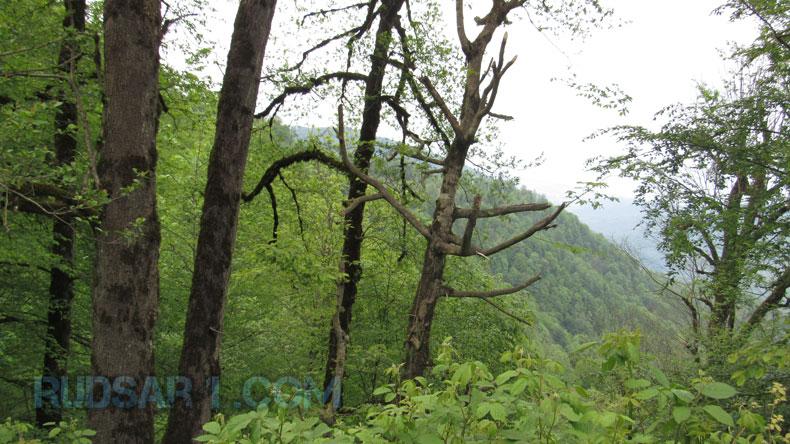 جنگل دوآب چابکسر