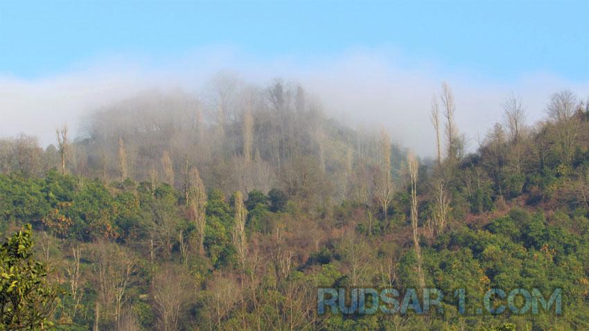 جنگل دوآب