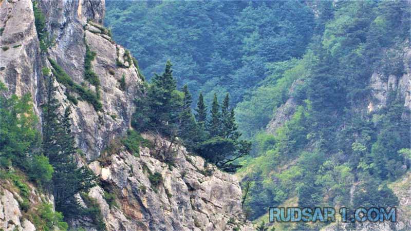 درختان صخره های سی پرد
