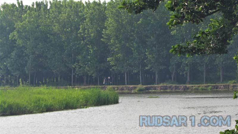 پارک جنگلی لله رود رودسر
